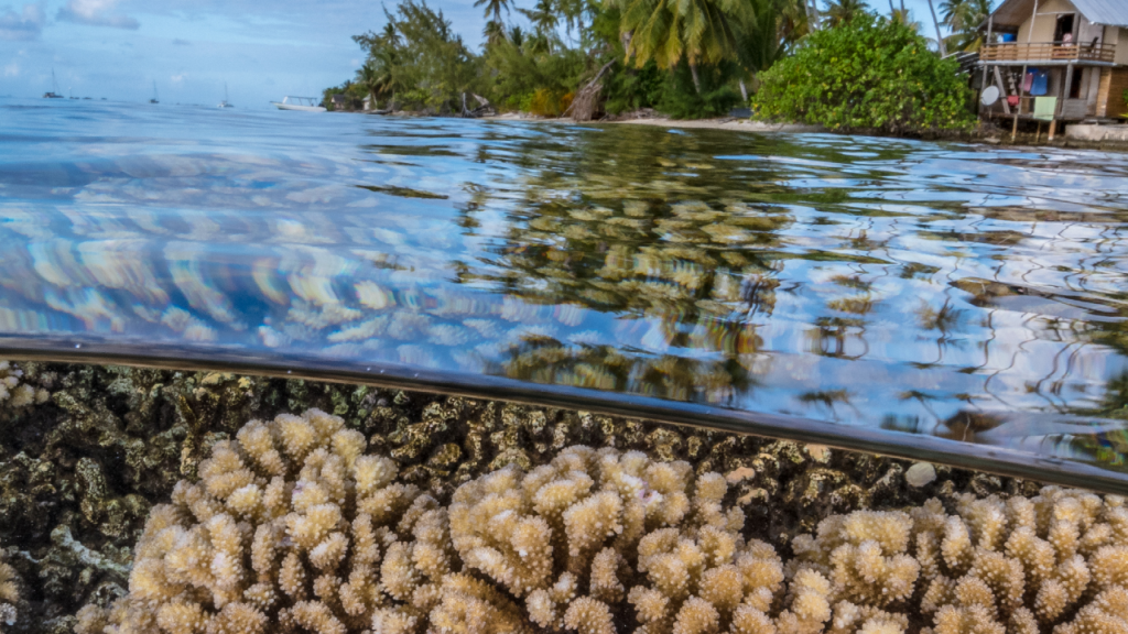 Coral reef French Polynesia